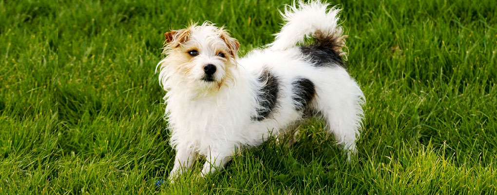 Dog Home Sitters Brixham